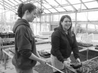 Plant and Animal Science class member Chelsea Drown and Tara Barber are working with other Middlebury FFA members to run the school greenhouse this spring.